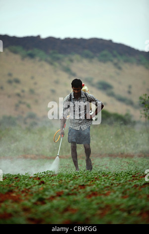Indian man spraying pesticide unprotected Andhra Pradesh South India - Stock Photo