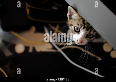 Hidden few weeks old kitten - Stock Photo