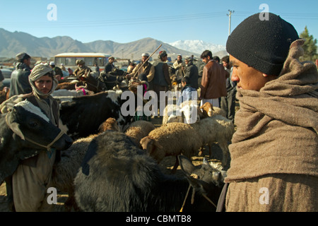 Cattle and sheep market in Kabul Afghanistan - Stock Photo