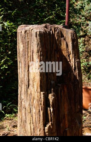 Tree Fossil Close Up Shot - Stock Photo