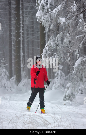 Nordic cross-country skiing / langlauf in winter in the snow at nature reserve High Fens / Hautes Fagnes, Belgium - Stock Photo