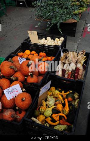 Black crates holding orange pumpkins, gourds, decorative corn, pea shoots, Brooklyn Borough Hall GreenMarket, Columbus - Stock Photo