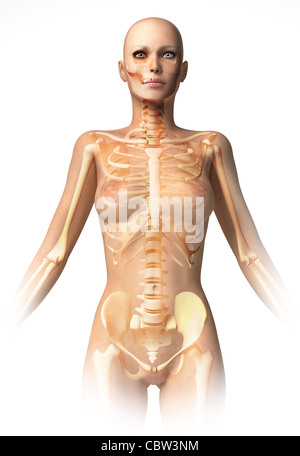 Anatomy Of Female Body With Bone Skeleton And All Internal Organs