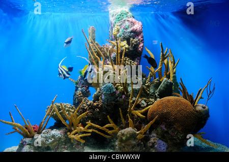 WASHINGTON DC, USA - A small tropical reef in a tank at the National Aquarium in Washington DC. The National Aquarium - Stock Photo
