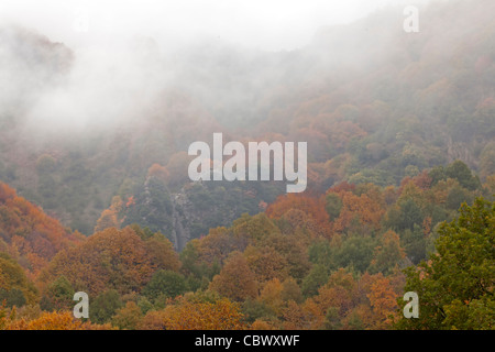 Colorful autumn forest with clouds - Stock Photo