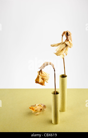 Two dried Daffodils in yellow paper tubes - Stock Photo