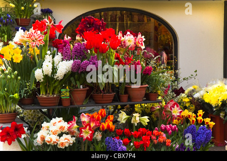 Lots of colorful spring flowers outside a florist shop - Stock Photo