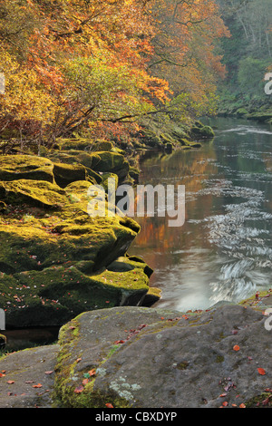 Beautiful autumn color near The Strid in Wharfedale, Yorkshire, England - Stock Photo