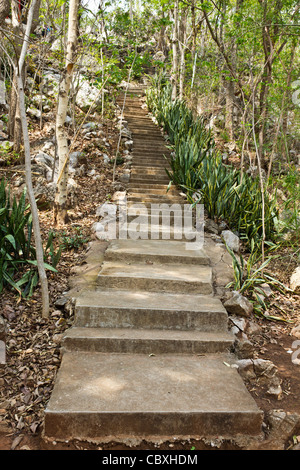 stone stairway leads up a hill in the forest - Stock Photo