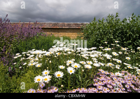 Wild flower border with Oxeye Daisies and other plants - Stock Photo