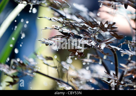 Close-up of Water Droplets Falling from Bronze Japanese Maple Fountain on Display at the Royal Hampton Court Flower - Stock Photo