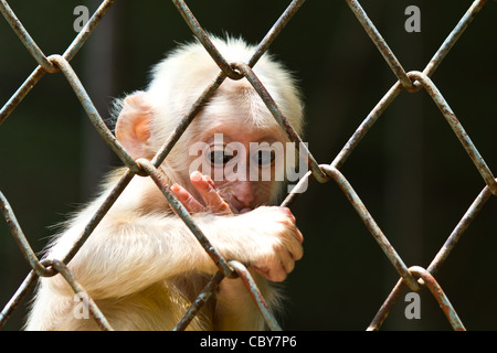 Sad little monkey in the cage of zoo - Stock Photo