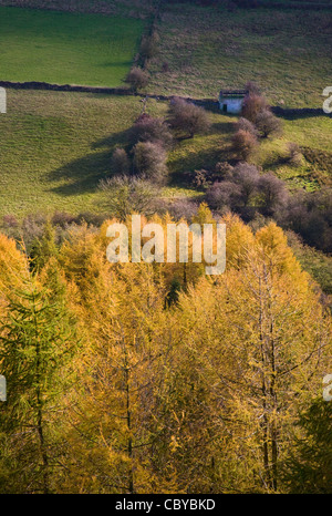 Autumn colours of larches and field boundary walls from Cratcliffe Tor near Birchover in the Derbyshire Peak District - Stock Photo