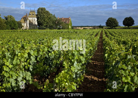 CORTON ANDRE CHATEAU AND VINEYARDS, THE GREAT BURGUNDY WINE ROAD, ALOXE-CORTON, COTE D'OR (21), FRANCE - Stock Photo