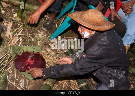 India, Arunachal Pradesh, Along, Kombo, Hurin festival, men fortune telling by reading liver from sacrificed pig - Stock Photo
