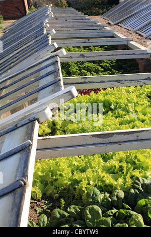 Brick and glass cold frame in country garden, Surrey England UK ...