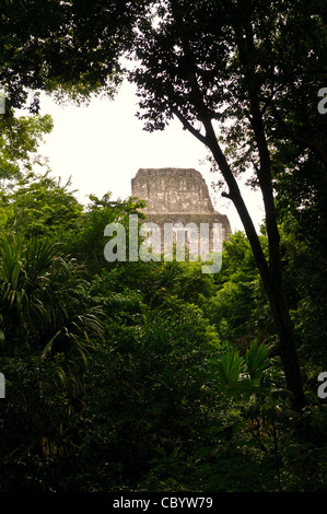 TIKAL, Guatemala - The top of Temple 2 (Temple of the Masks) is framed by the thick jungle trees in the Tikal Maya - Stock Photo