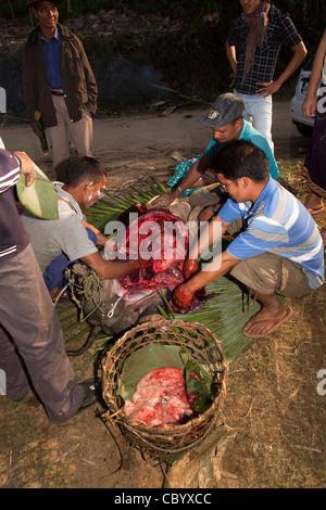 India, Arunachal Pradesh, Along, Kombo, Hurin festival, men removing liver from sacrificed pig for fortune telling - Stock Photo
