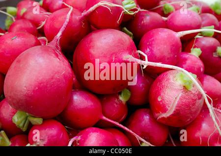 Fresh radish on display at the market. - Stock Photo