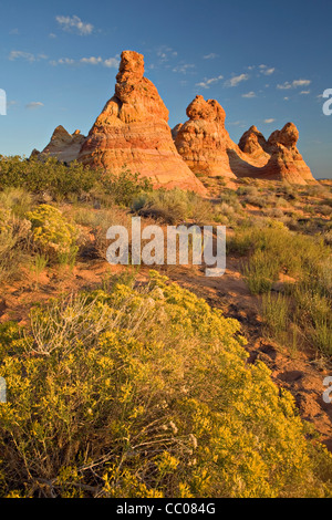 Rabbit brush blooms near the sandstone teepee formations of South Coyote Buttes in Arizona - Stock Photo