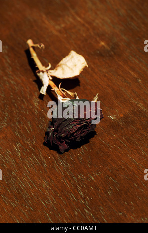 Dry rose - Stock Photo