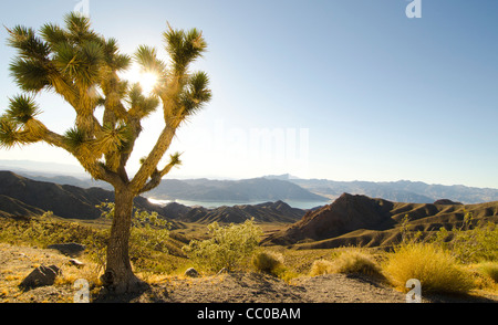High desert overlook of Lake Mead Arizona - Stock Photo