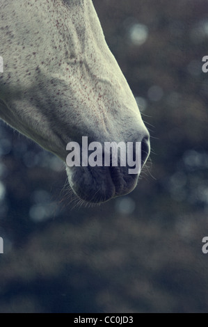 Horse's mouth - Stock Photo