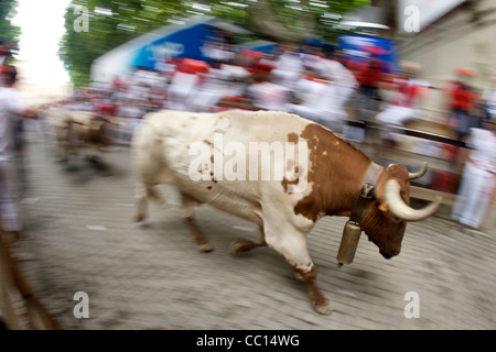 Steers running during the annual festival of San Fermin (aka the running of the bulls) in Pamplona, Spain. - Stock Photo