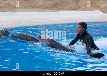 Loro Parque, Tenerife's prime wildlife-zoo attraction. The Dolphin Show.