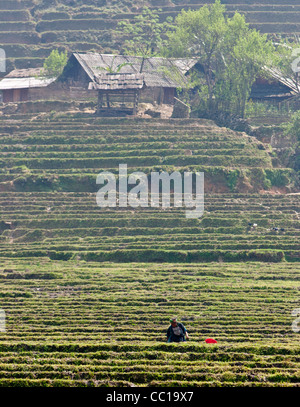 A woman in the traditional costume of the Black H'Mong tribe working in a paddy field with her village behind - Stock Photo
