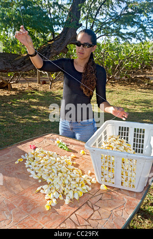 Learning how to string a lei with plumeria flowers on Molokai, Hawaii, USA. - Stock Photo