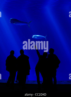 Sihouettes of people watching a large aquarium - Stock Photo