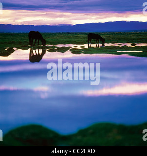 Two horses are grazing in Sogog Gol River Valley. West Mongolia. Asia - Stock Photo