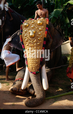 A decorated Temple Elephant in Sitting position allowing a man to Climb on its top. - Stock Photo