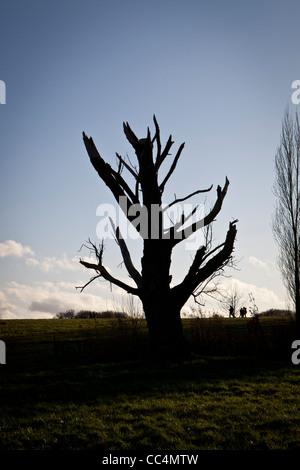 Dead tree on Hampstead Heath, London, England UK - Stock Photo