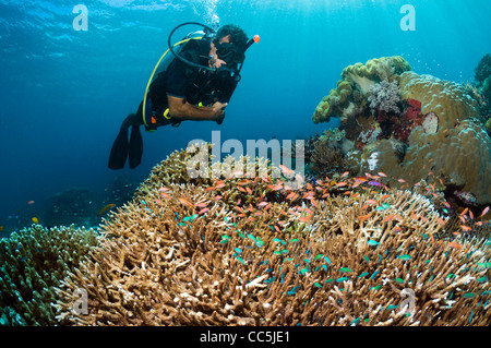 Male scuba diver watching Lyretail anthias and Blue-green chromis on coral reef - Stock Photo
