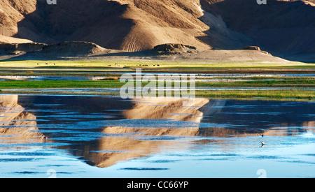 Pangong Tso, Ngari, Tibet, China - Stock Photo