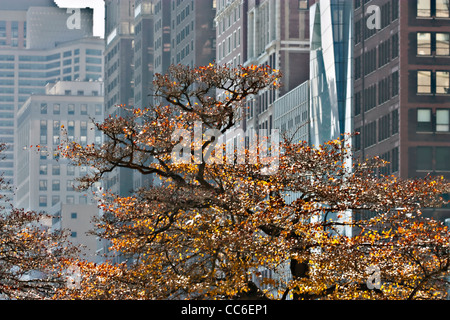 Autumn tree in Chicago park - Stock Photo