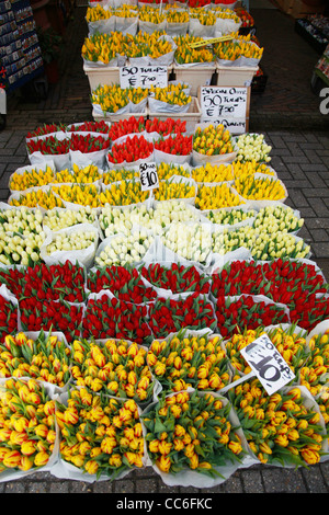 Various tulip for sale in a flower shop, Amsterdam, Netherlands - Stock Photo