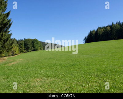 mountain meadow with wood in summer / Bergwiese mit Wald im Sommer - Stock Photo