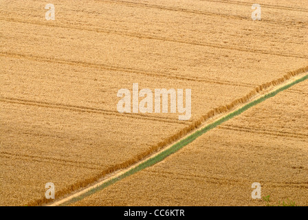 Footpath through farmers field, (north downs way), kent,england,uk - Stock Photo