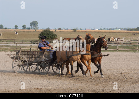 Hungary, Kalocsa. Traditional Hungarian ranch & cowboy show at Bakodpuszta Equestrian Center. Wagon team. - Stock Photo