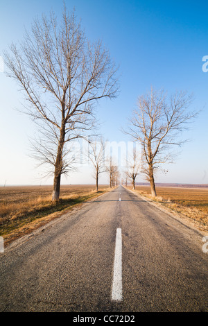 Landscape with straight empty road between poplar trees - Stock Photo