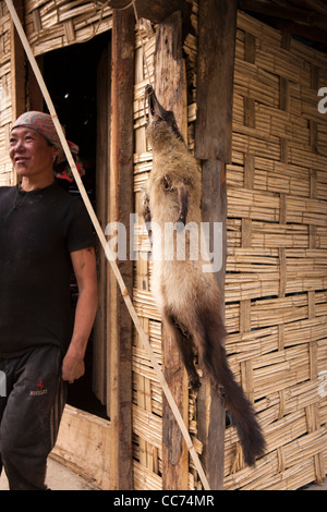 India, Arunachal Pradesh, Bomdila, skin of Asian Palm Civet Paradoxurus hermaphroditus, drying outside house - Stock Photo