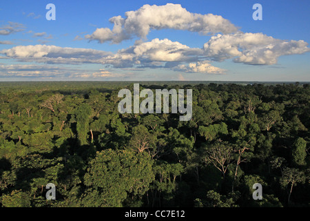 Primary Rain Forest viewed from the air in the Madre de Dios Region, Peru - Stock Photo