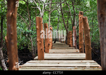 Forest Walk, Mangrove Swamp, Zanzibar, Tanzania - Stock Photo