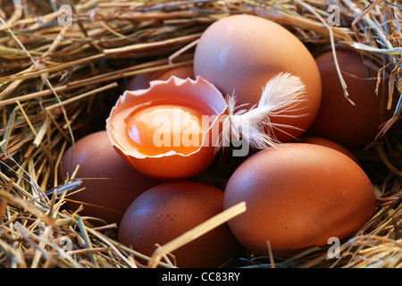 Eggs in the straw - Stock Photo