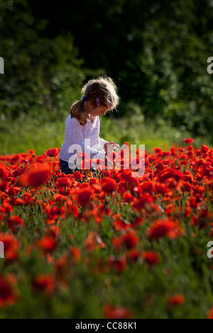 small cute girl on a red poppy field - Stock Photo