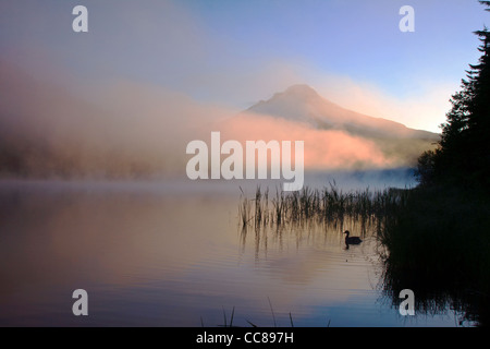 Foggy Sunrise over Trillium Lake with a duck floating in foreground & Mt Hood behind - Stock Photo
