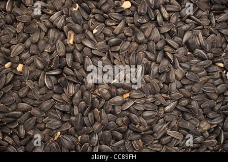 Background Of Black Oil Sunflower Seeds